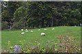 NM9535 : Sheep and field bear Ardachy by Nigel Brown