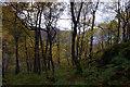 NY2616 : Woodland below Grange Fell by Ian Taylor