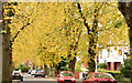 J3774 : Autumn trees, Ballyhackamore, Belfast (October 2015) by Albert Bridge