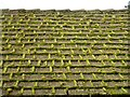 TF6828 : Moss on the roof - Sandringham Visitors Centre, Norfolk by Richard Humphrey