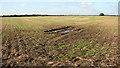 TM3798 : Field west of Sandy Lane by Evelyn Simak