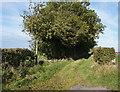 NY6133 : Bridleway towards Crewgarth by Ian S