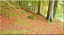 J3268 : Autumn, Minnowburn, Belfast - October 2015(2) by Albert Bridge