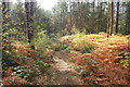 SJ5470 : Delamere Forest by Jeff Buck