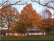 ST3186 : Autumn colours, Mendalgief Road by Robin Drayton