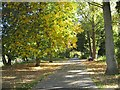 SO8454 : Autumnal riverside walk by Philip Halling