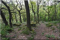 SK2579 : Woodland path in Yarncliff Wood by Bill Boaden
