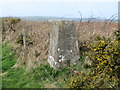 SX1990 : Hedge Side view at Warbstow Triangulation Pillar by Peter Wood