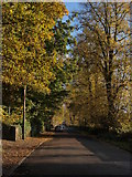 NS3882 : Old Luss Road by Alec MacKinnon