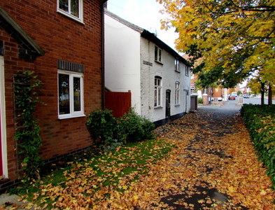 SJ5441 : Carpet of autumn leaves, Dodington, Whitchurch, Shropshire by Jaggery