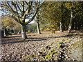 SE0239 : Oakworth Cemetery - Wide Lane by Betty Longbottom
