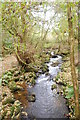 SN0334 : Afon Gwaun by Trevor Harris