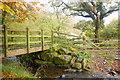 SN0333 : Footbridge at Dan Coed by Trevor Harris