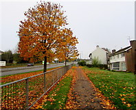 ST3090 : Autumn colours, Malpas Road, Newport by Jaggery