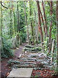 TQ2886 : Path through the graves by Bill Nicholls