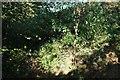 SY4195 : Blocked bridleway on the Monarch's Way by Derek Harper
