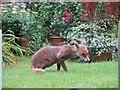 TQ2886 : The Highgate Fox by Bill Nicholls