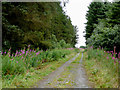 SN5564 : Forestry road south-east of Nebo, Ceredigion by Roger  Kidd