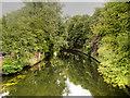 TG2409 : River Wensum by David Dixon