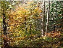 NH5966 : Beside the esker path in Evanton Community Wood by Julian Paren