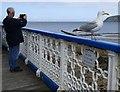 SH7882 : A scene on Llandudno pier by Gerald England