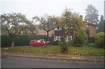 SU5750 : Houses along The Drive by Sandy B