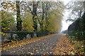 SK4685 : Autumn leaves on Piper Lane by Graham Hogg