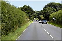 TG2815 : A1151 North of Rackheath by David Dixon