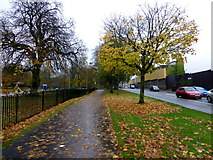 H4573 : Fallen leaves, Omagh by Kenneth  Allen