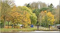 J3371 : Autumn trees, Stranmillis, Belfast (November 2015) by Albert Bridge