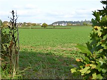 SX9499 : Field south-west of Rewe by David Smith