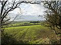 NZ2324 : Field with emerging crop by Trevor Littlewood