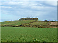 TL4239 : Down Plantation by Robin Webster