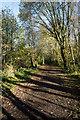 NZ1155 : Tree shadows on Derwent Walk by Trevor Littlewood