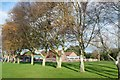 SK6666 : A line of trees beside the hockey pitch at Wellow House School by Graham Hogg