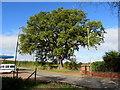 SJ5541 : Dominant tree, Waymills, Whitchurch, Shropshire by Jaggery