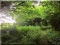 SU0021 : Footpath to Woodminton Down by Derek Harper