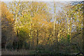TL4703 : Sunlight catches the trees in Lower Forest, Epping by Roger Jones