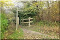 TQ3854 : Path junction by Titsey Plantation by Derek Harper