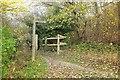 TQ3854 : Path junction by Titsey Plantation by Derek Harper