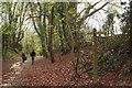 TQ3954 : Pitchfont Lane by Derek Harper
