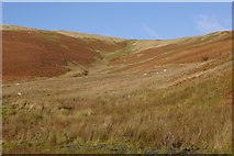 NT2819 : Turner Cleuch Law by Richard Webb