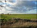 TF3902 : Grassland on Guyhirn Wash - The Nene Washes by Richard Humphrey