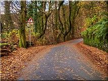 NY3704 : Ambleside, Stockghyll Lane by David Dixon