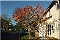 SX9065 : Cherry tree, Arthington, Torre by Derek Harper