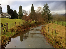 NY3704 : Ambleside, Under Loughrigg by David Dixon