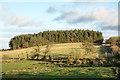NZ2047 : Taylorshill Plantation by Trevor Littlewood