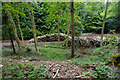 SO9213 : Piles of logs in Witcombe Wood by Bill Boaden