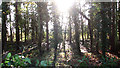 TG2001 : Strip wood north of Lodge Farm by Evelyn Simak