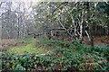 SK6368 : Woodland at Bilhaugh by Graham Hogg